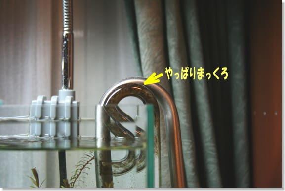 芥川隆行の画像 p1_10