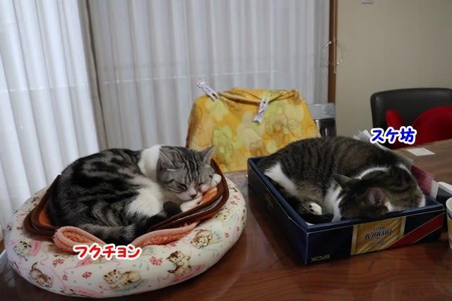 のんちゃんの七宝焼き&和風ギョーザ♪