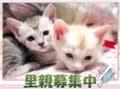 コトコト猫日記