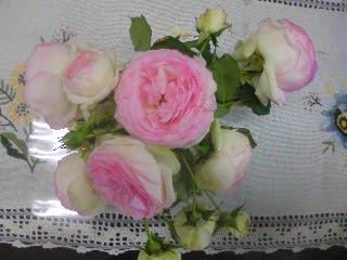 100523_roses