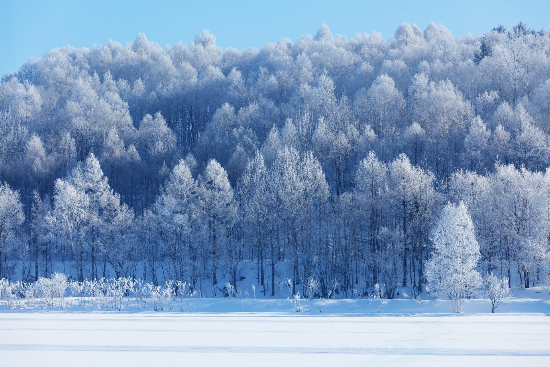 北海度雪景色画像