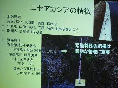 ニセアカシアの画像 p1_4
