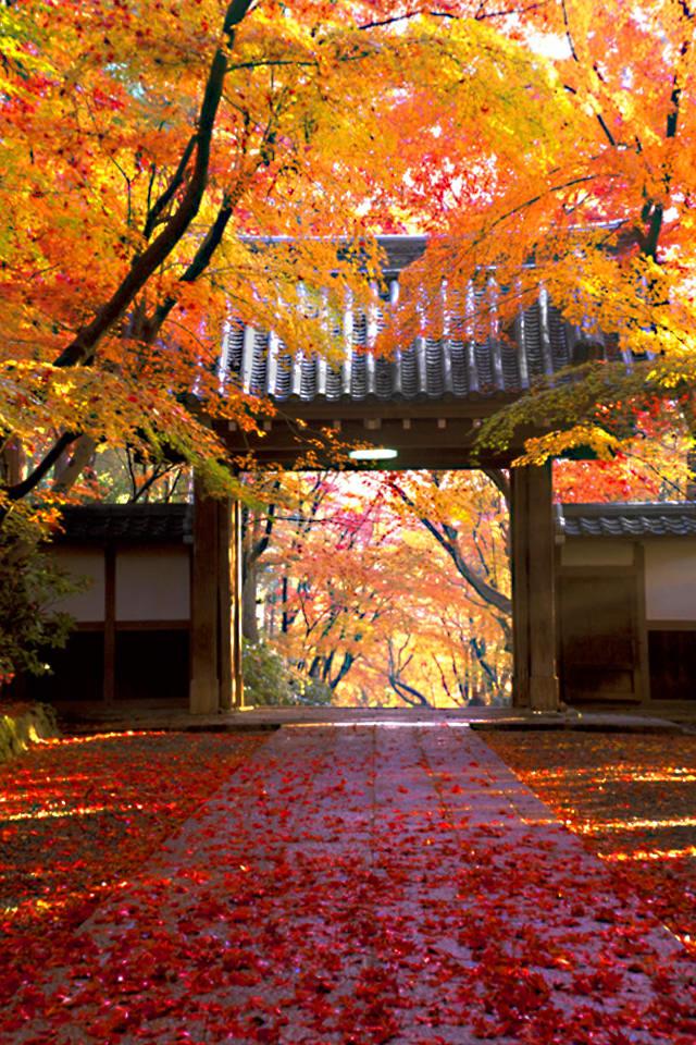 【秋の季節】スマホ用ホーム・ロック画面・壁紙画像【シーズン編】(FAll.Autm\u2026