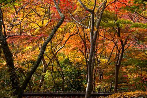 有馬温泉瑞宝寺公園の紅葉