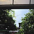 2011-6-4-34 ツル性植物
