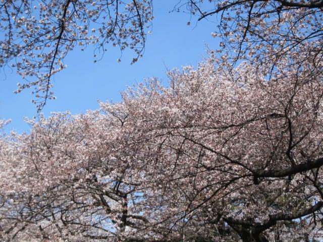 http://blogimg.goo.ne.jp/user_image/73/56/eb511769d474cf6d2e00c3f53880383f.jpg
