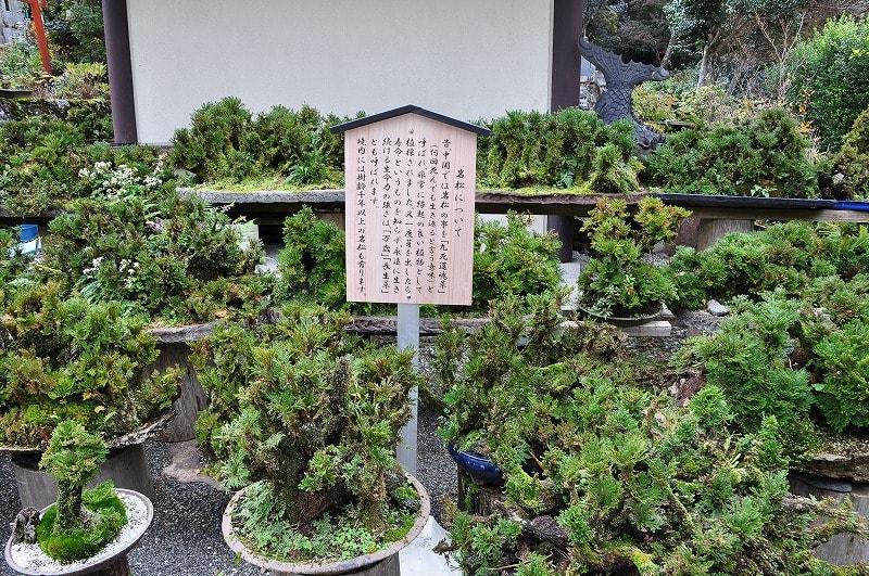 鷲家龍泉寺の岩松