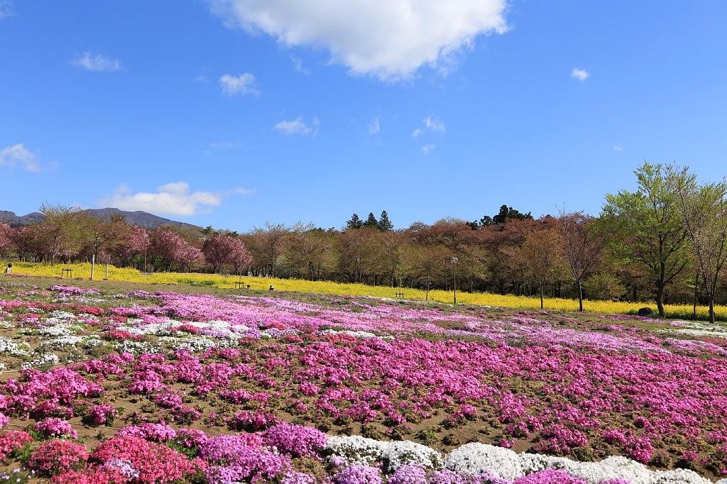 「群馬フラワーパーク 桜」の画像検索結果