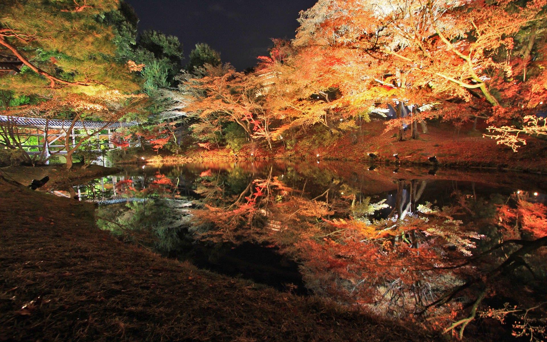 高台寺の紅葉の壁紙