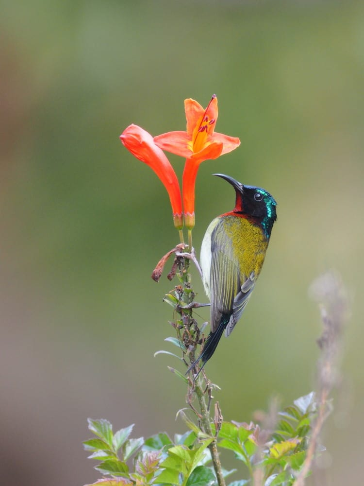 トーラム 花 の 蜜