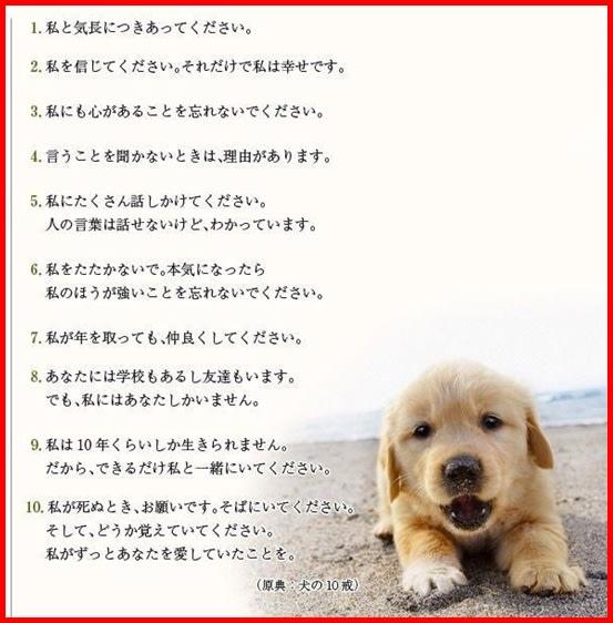 犬の十戒 | colors