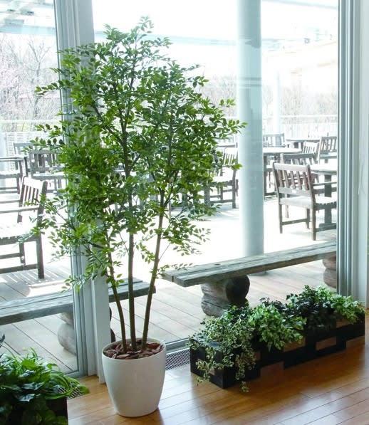 カフェ風 人工観葉植物樹木 造花フェイクグリーン設置画像