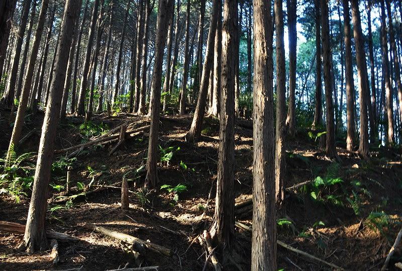 石川古城古墳群森