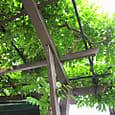 2011-6-4-21 ツル性植物