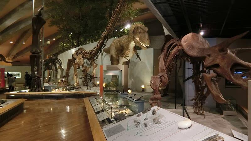 恐竜の標本