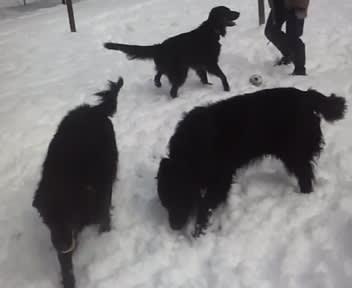 雪がいっぱい~!