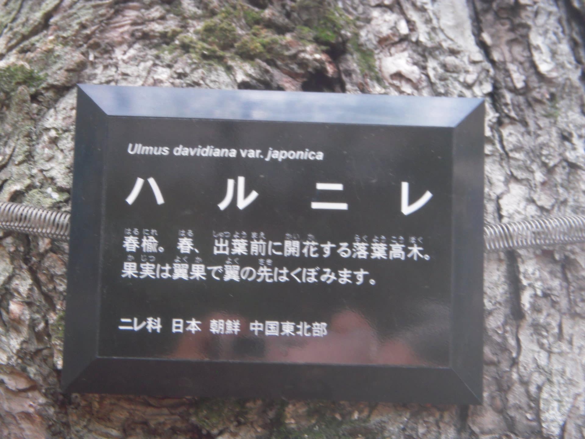 春楡 - OKADAのプチBLOG