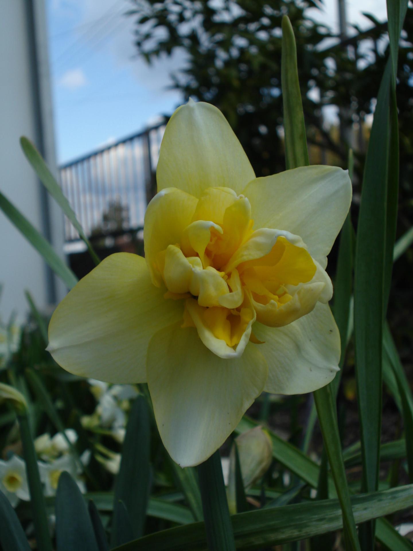 春を見つけよう♪ Part4 - 遠州の空の下から