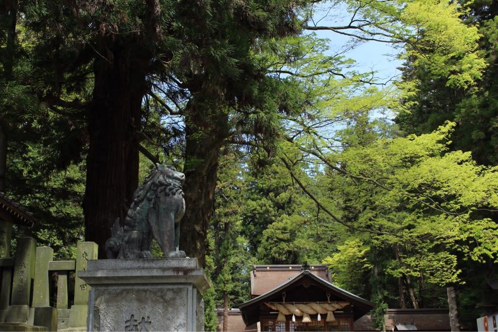 樹木の太さに圧倒されます。 隣接する万治の石仏へ向かいます。 赤い橋を... 諏訪大社下社 春宮