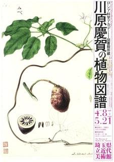 川原慶賀の画像 p1_8