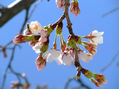 貸切家族露天風呂の桜