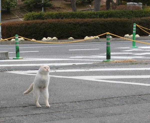 ねこ [無断転載禁止]©bbspink.comYouTube動画>17本 ->画像>1441枚