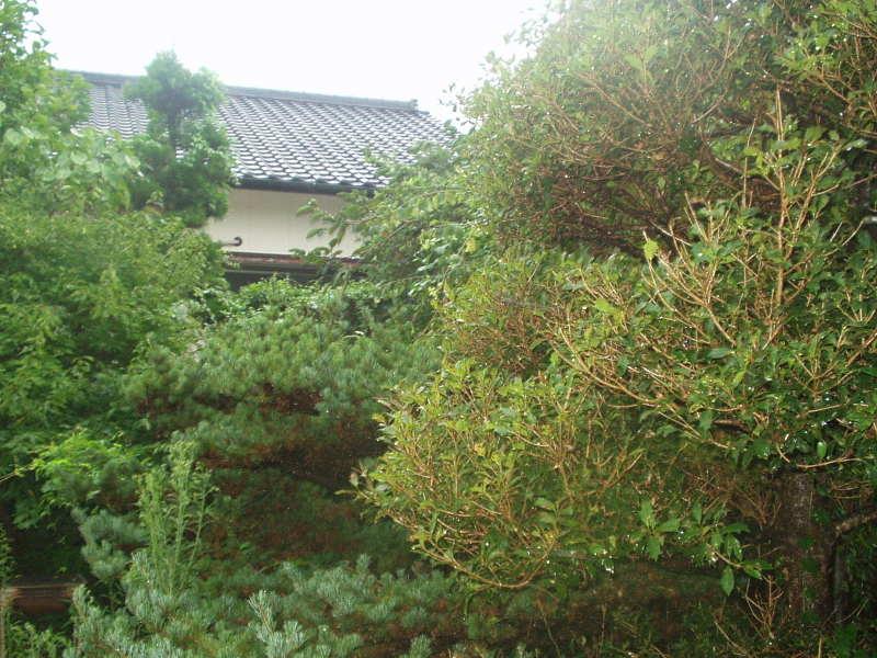 庭の維持管理 外観写真2