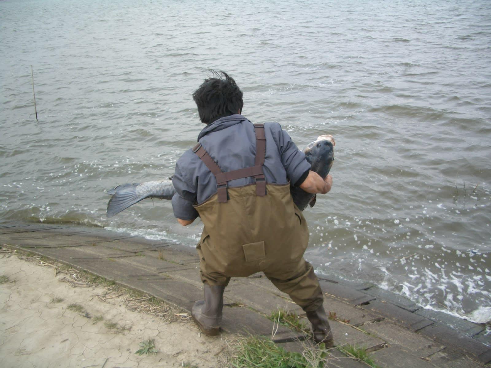 川の巨大魚 アオウオ - 小見川 高橋つり具 ブログ