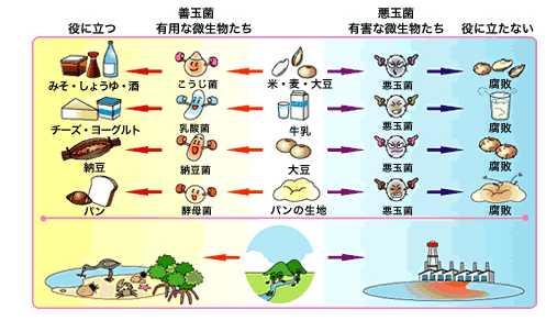 有害な微生物たち」として紹介