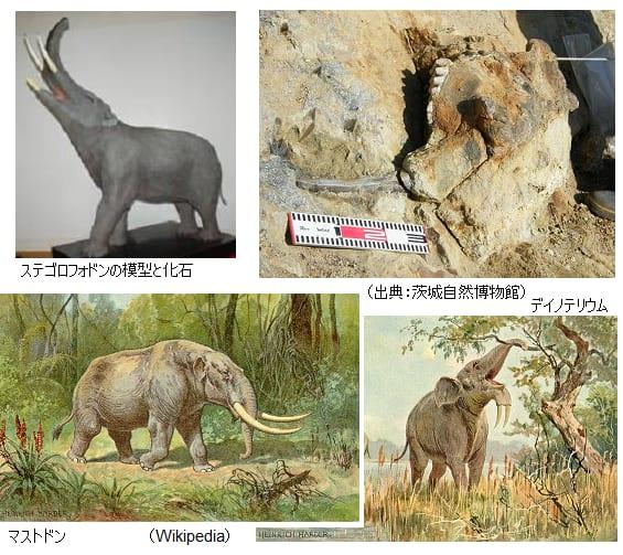 Category:化石長鼻目 (page 1) -...