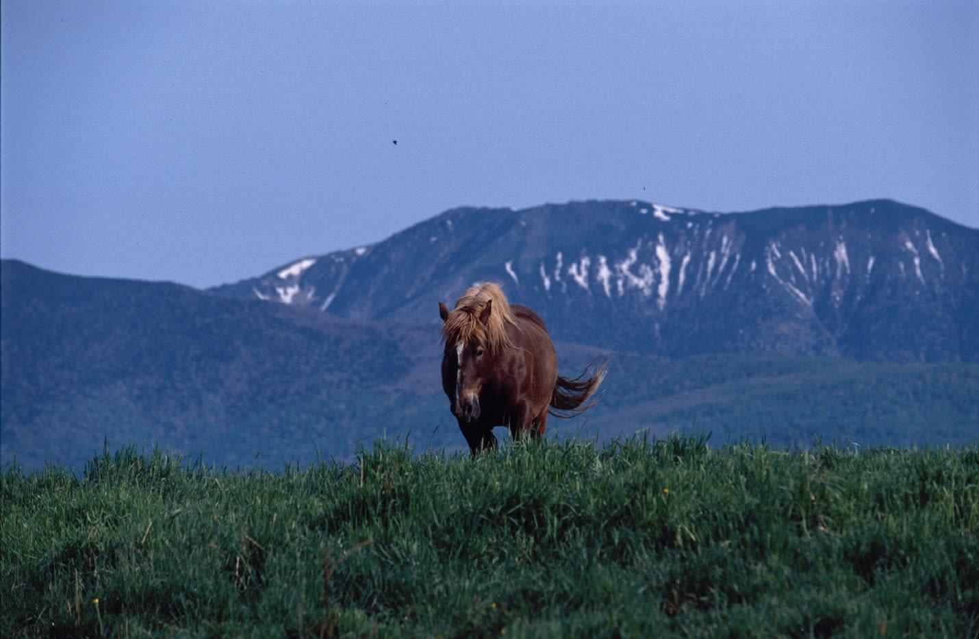 早池峰山の画像 p1_36