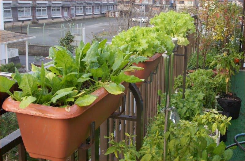 家庭菜園の幸せはここに♪ ... : 体積 重さ 換算 : すべての講義
