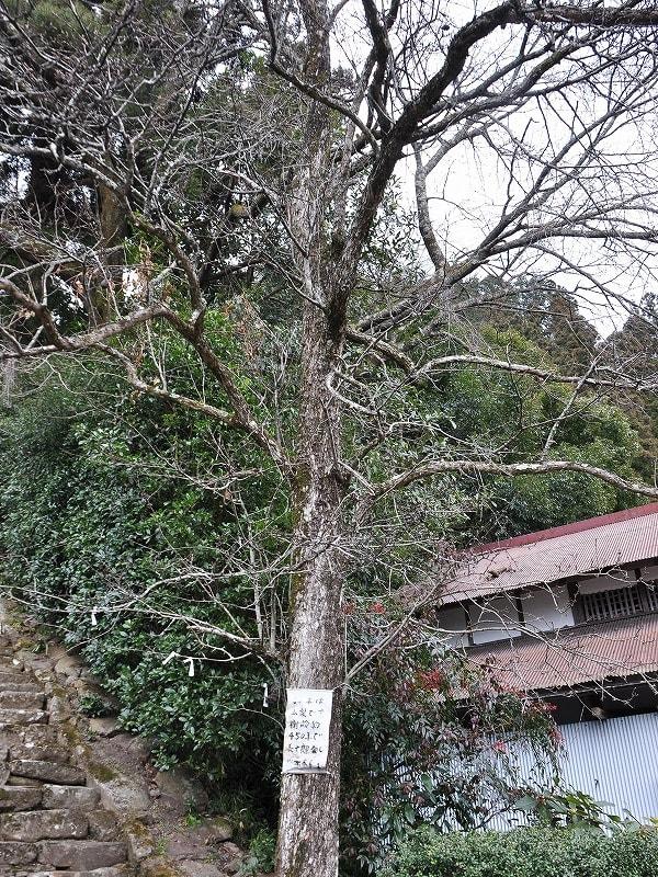 仏隆寺の山梨