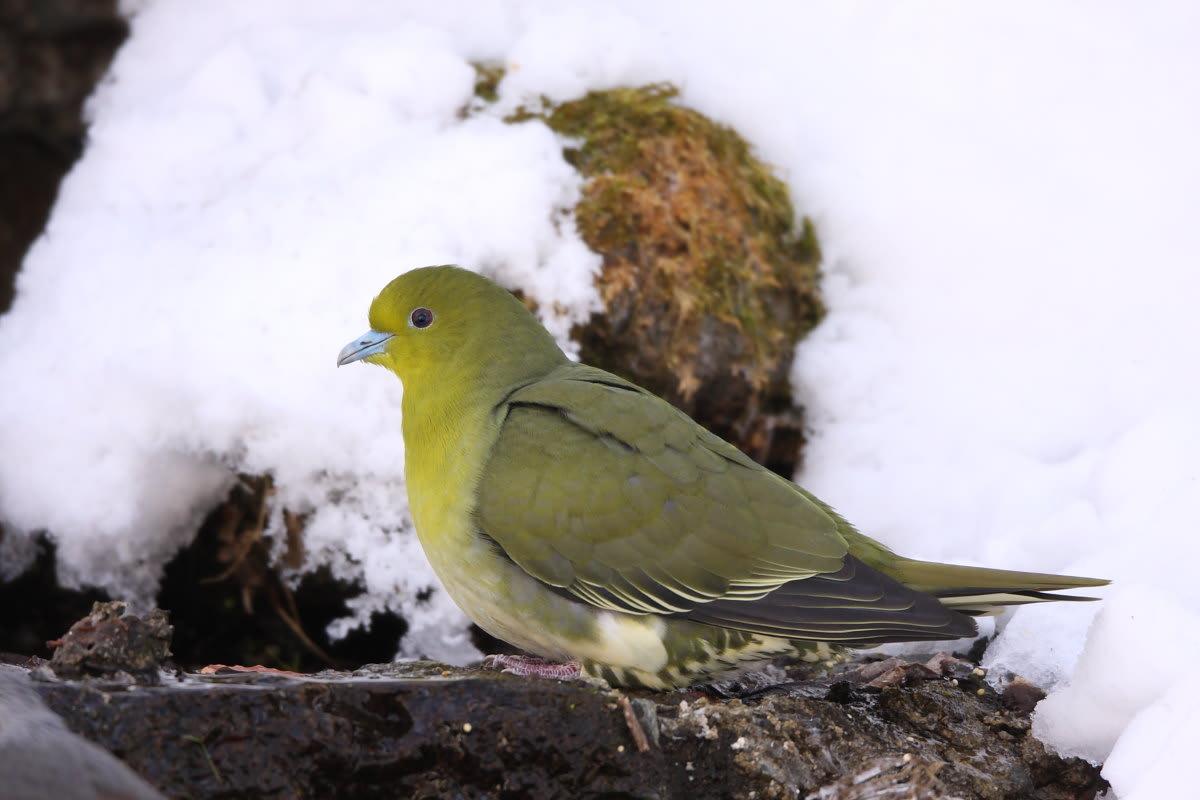 NAVER まとめ【野鳥】日本の野山にいる青い鳥写真集