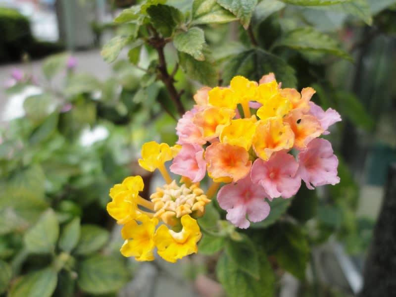 08月27日 小さな花