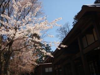 圓流院前の桜も満開。ちなみに建物の中に入るのに御布施は任意ですが・・・