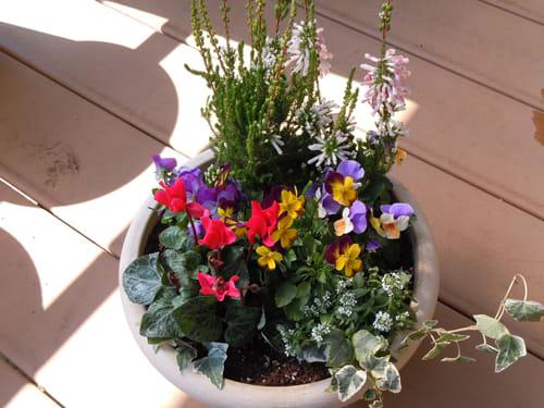 秋の寄せ植えをはじめましょう! - 我が家の花壇 ...