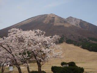今日の桝水。人は居ないけど桜は満開