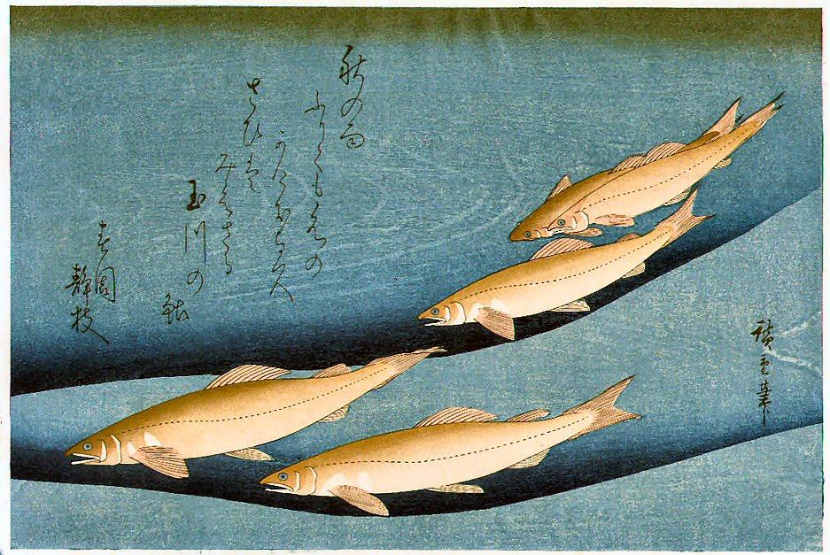 鮎の画像 p1_33