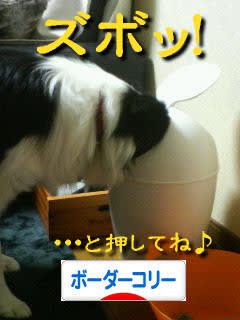 日本ブログ村 犬ブログ ボーダーコリーへ