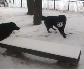 信州は昨夜から雪