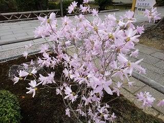 長谷川久蔵の画像 p1_8