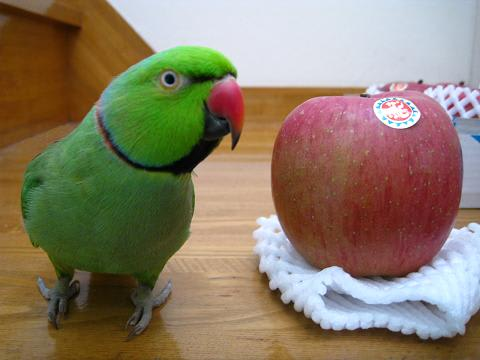 リンゴの画像 p1_2