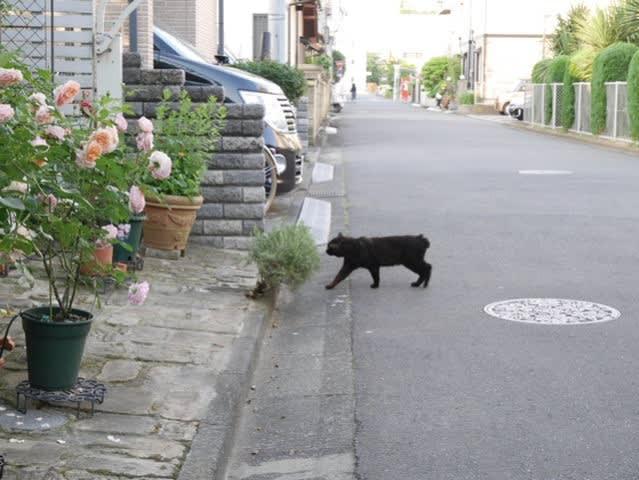 うち猫 外猫