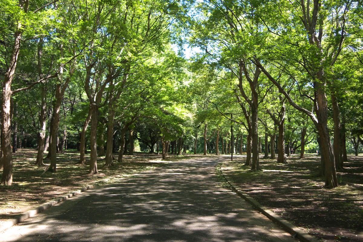 代々木公園 : 【東京・春デート ...