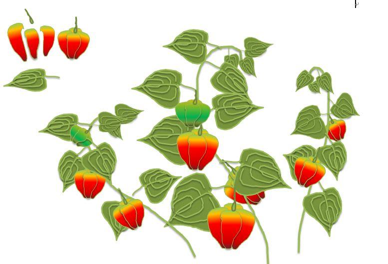すべての講義 あじさいの絵 : ほおずき…お盆の花って ...