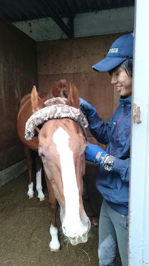 ジャンル:学校 競馬学校・騎手・厩務員受験サポート、牧場・乗馬クラブ就職 馬の学校 『アニマル・