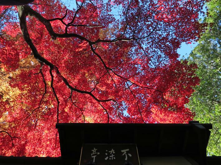 中院紅葉 - 川越写真日記