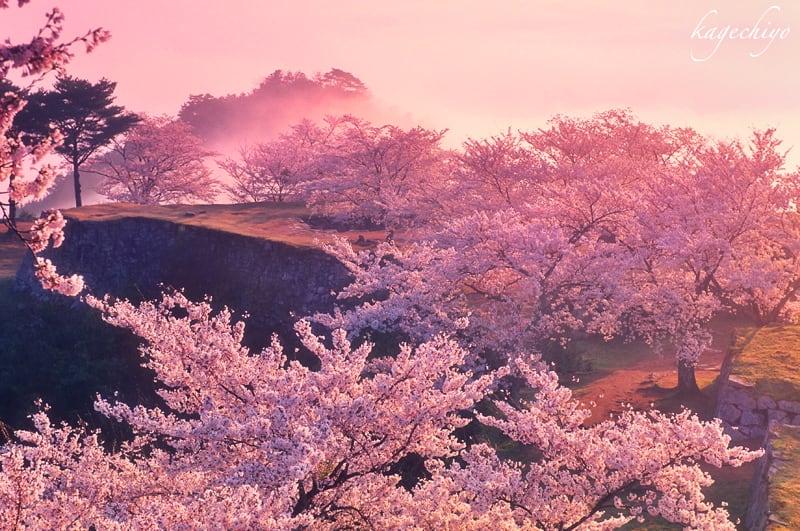 天上桜~春色の宴に - フォトロ...