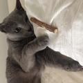 momo_no_hana368